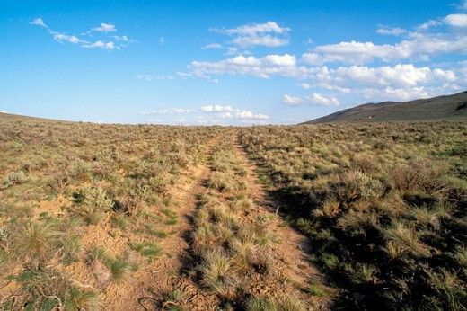 wagon-tracks-oregon-trail
